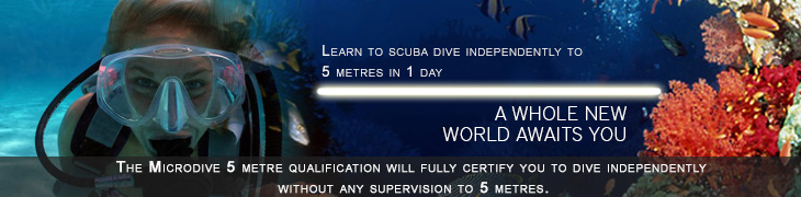 learn to scuba dive today
